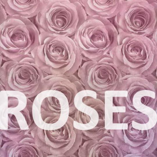 Фотореалистичные обои с розами 3D
