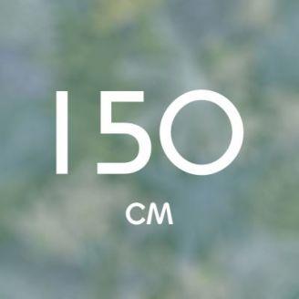 150 см