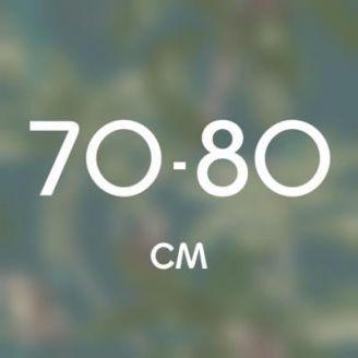 70-80 см