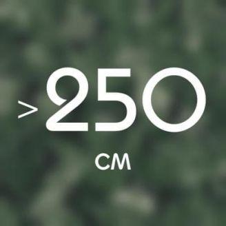 Более 250 см
