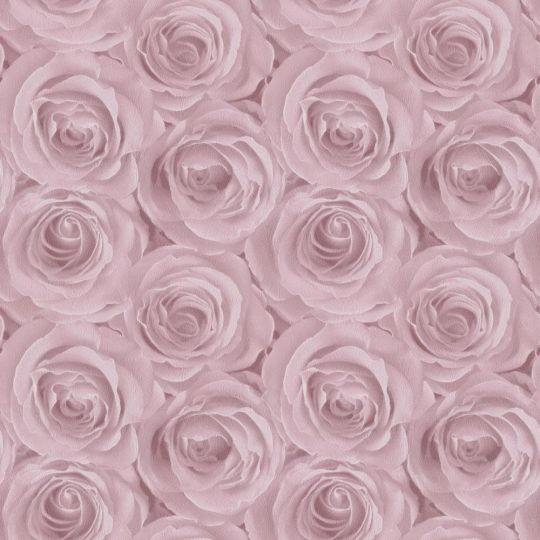 Метровые обои AS Creation Roses 37644-1 розовые розы 3D эффект
