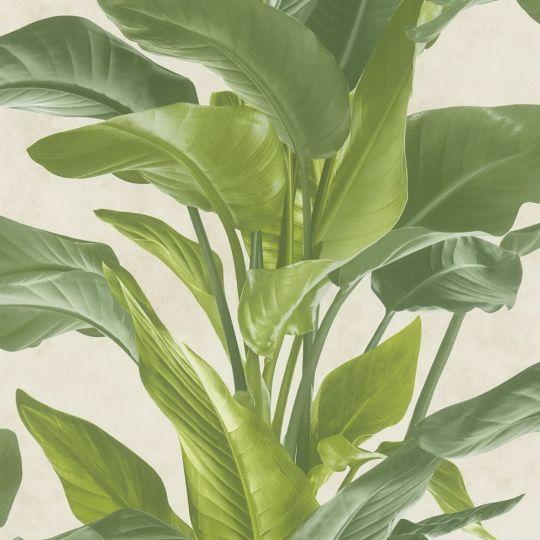 Обои AS Creation Metropolitan 2 37862-3 банановое дерево зеленое