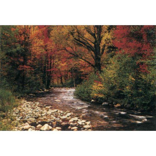 Фотообои Komar 93942 лесной пейзаж 388 х 270 см