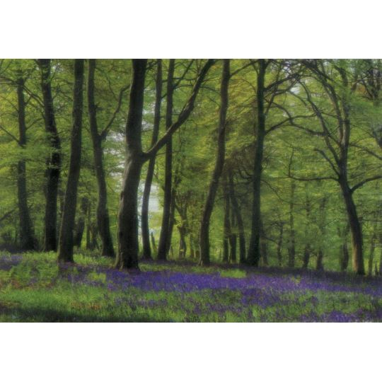 Фотообои Komar 98251 зеленый лес 368 х 254 см